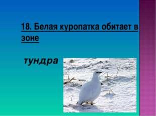 18. Белая куропатка обитает в зоне тундра
