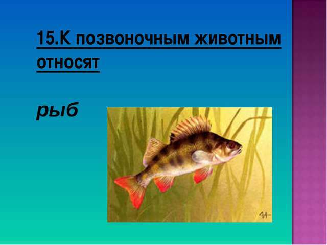 15.К позвоночным животным относят рыб