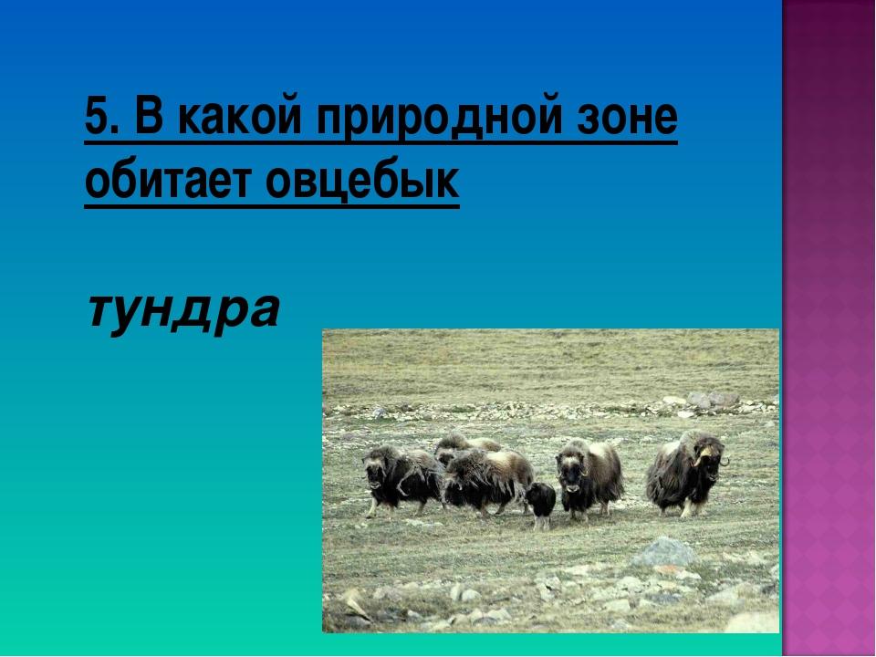 5. В какой природной зоне обитает овцебык тундра