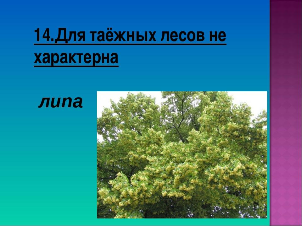 14.Для таёжных лесов не характерна липа