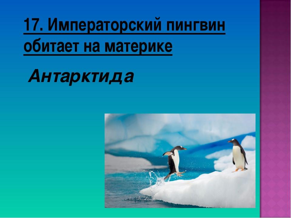 17. Императорский пингвин обитает на материке Антарктида