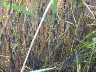 Самые масштабные миграции: Стрекозы -14–18 тыс. км - могут похвастаться само