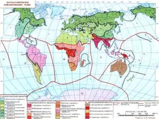 Зоогеографическая область – территория, характеризующаяся набором видов живо