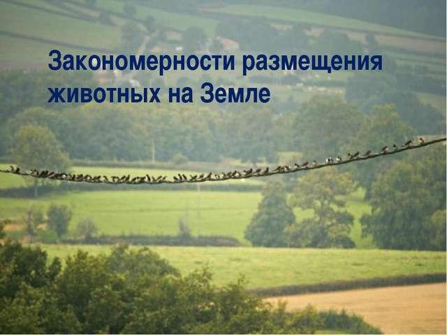 Закономерности размещения животных на Земле