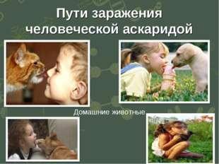 Пути заражения человеческой аскаридой Домашние животные