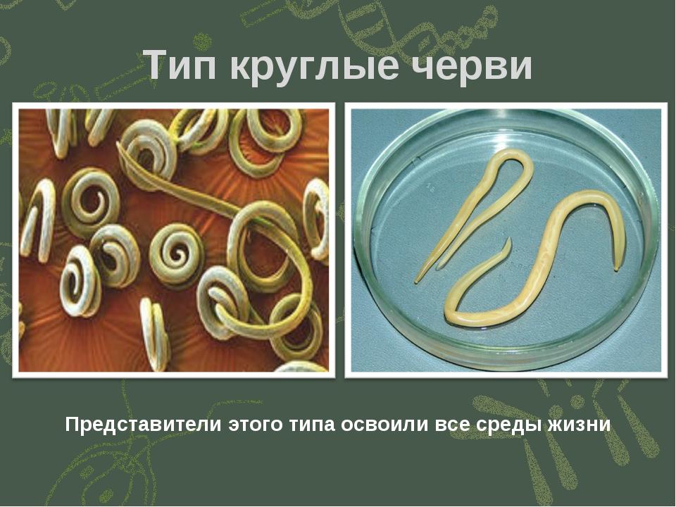 Тип круглые черви Представители этого типа освоили все среды жизни