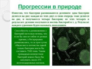 Прогрессии в природе Известно, что бактерии размножаются делением: одна бакте