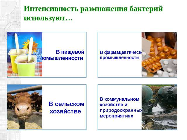 Интенсивность размножения бактерий используют… В пищевой промышленности В фар...