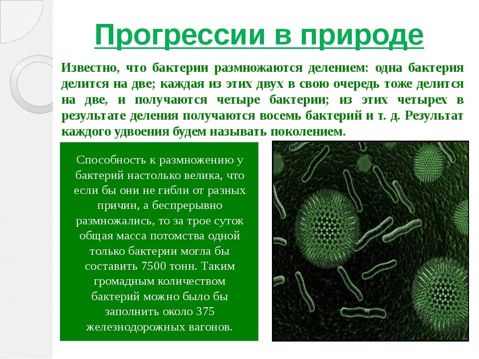 Прогрессии в природе Известно, что бактерии размножаются делением: одна бакте...