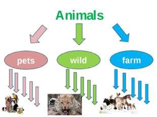 Animals pets wild farm