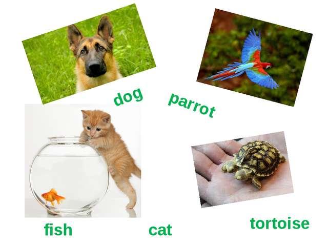 tortoise dog fish cat parrot