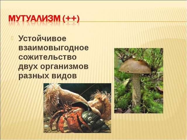 Устойчивое взаимовыгодное сожительство двух организмов разных видов