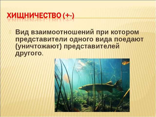 Вид взаимоотношений при котором представители одного вида поедают (уничтожают...