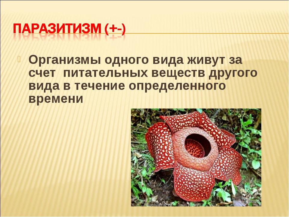 Организмы одного вида живут за счет питательных веществ другого вида в течени...