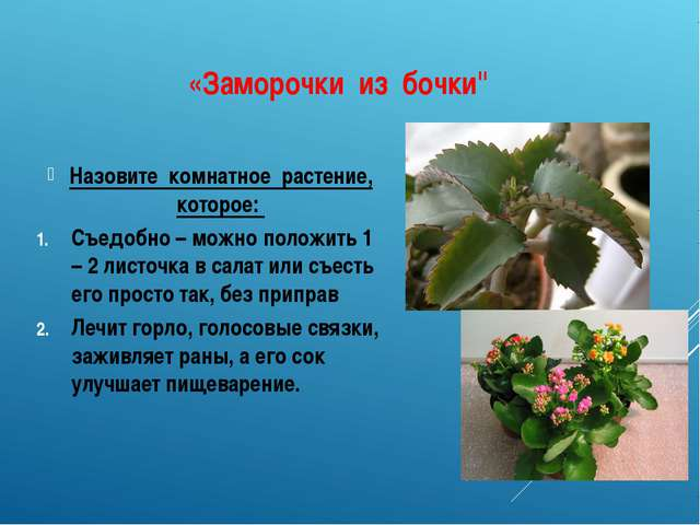 "«Заморочки из бочки"" Назовите комнатное растение, которое: Съедобно – можно п..."