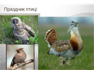 Праздник птиц!