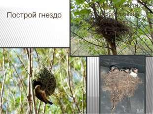 Построй гнездо