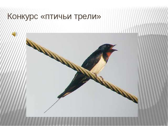 Конкурс «птичьи трели»
