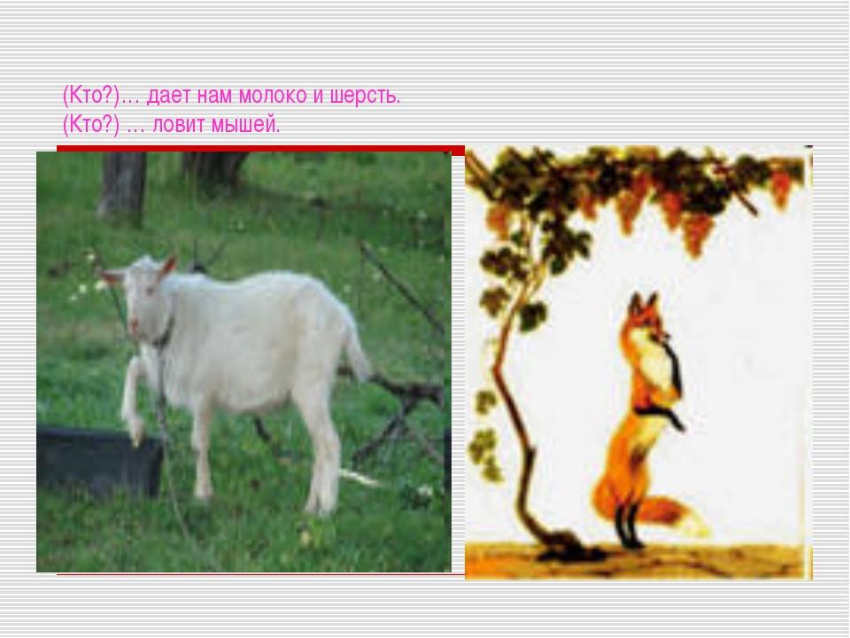 (Кто?)… дает нам молоко и шерсть. (Кто?) … ловит мышей.