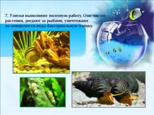 7. Улитки выполняют полезную работу. Они чистят растения, доедают за рыбами,
