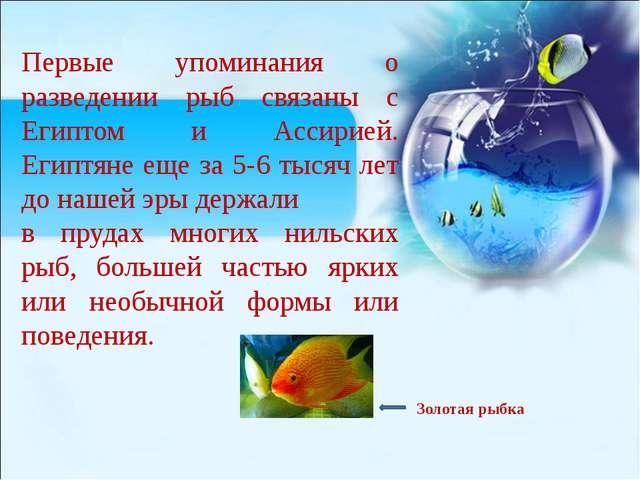 Первые упоминания о разведении рыб связаны с Египтом и Ассирией. Египтяне ещ...