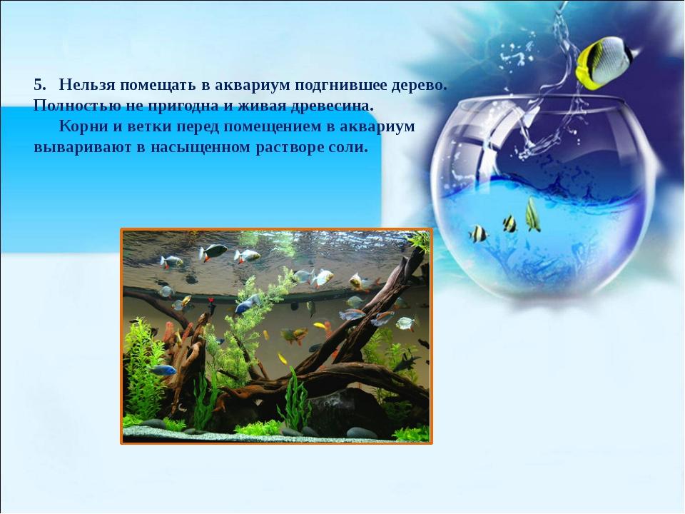 5. Нельзя помещать в аквариум подгнившее дерево. Полностью не пригодна и жива...