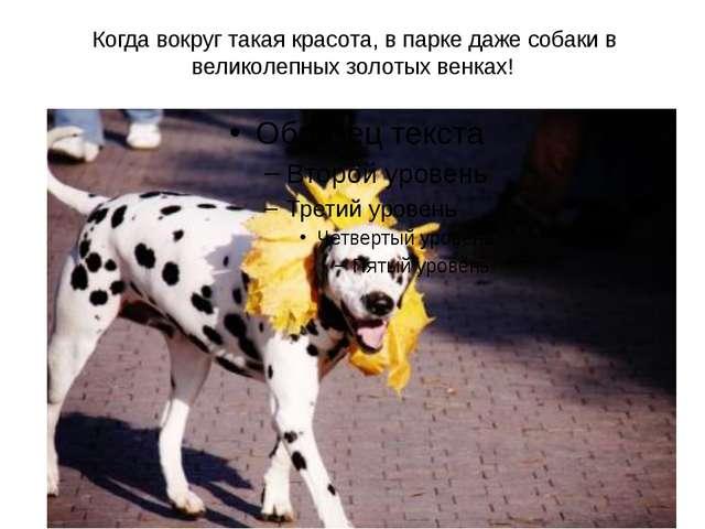 Когда вокруг такая красота, в парке даже собаки в великолепных золотых венках!