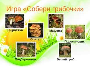 Игра «Собери грибочки» Сыроежка Опята Маслята Белый гриб Подберезовик Подосин