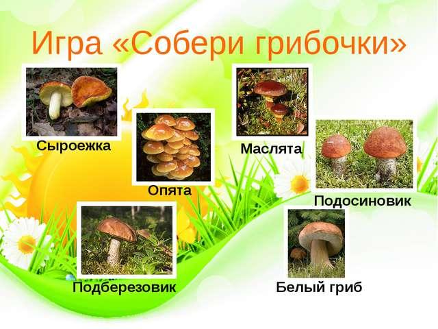 Игра «Собери грибочки» Сыроежка Опята Маслята Белый гриб Подберезовик Подосин...
