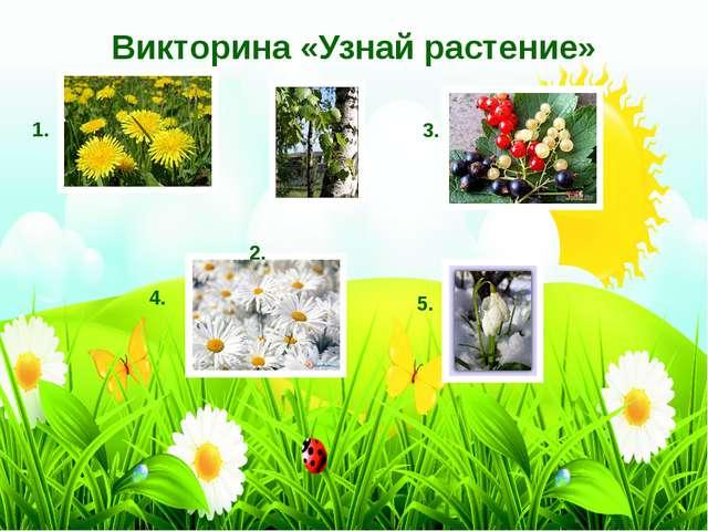 Викторина «Узнай растение» 1. 2. 3. 4. 5.