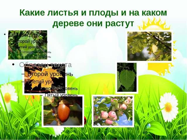 Какие листья и плоды и на каком дереве они растут