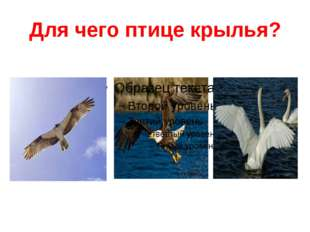 Для чего птице крылья?