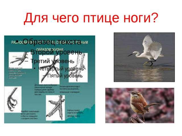 Для чего птице ноги?