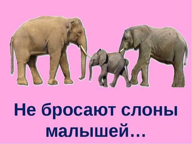 Не бросают слоны малышей…