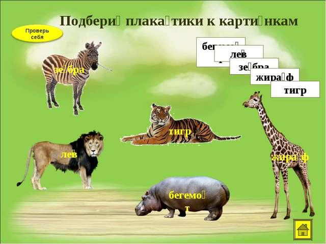 Подбери́ плака́тики к карти́нкам бегемо́т ле͞в зе́бра жира́ф тигр зе́бра ле͞в...