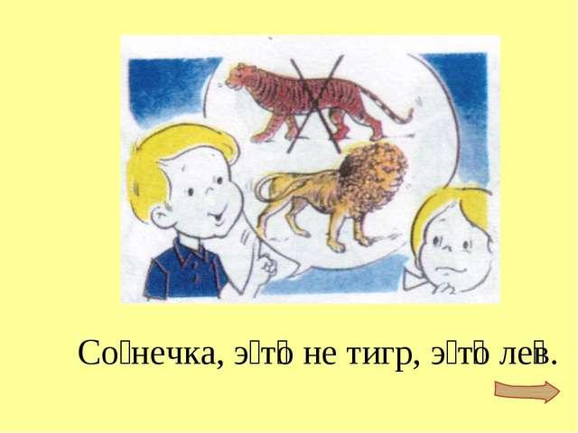 Со́нечка, э́т͞о не тигр, э́т͞о ле͞в.