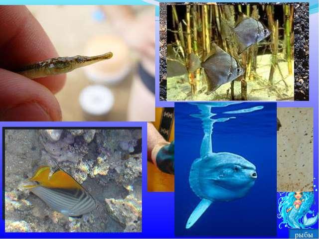 рыбы * х.Сухой 2010г х.Сухой 2010г