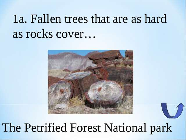1a. Fallen trees that are as hard as rocks cover… The Petrified Forest Nation...
