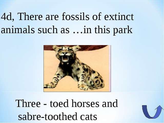 4d, There are fossils of extinct animals such as …in this park Three - toed h...