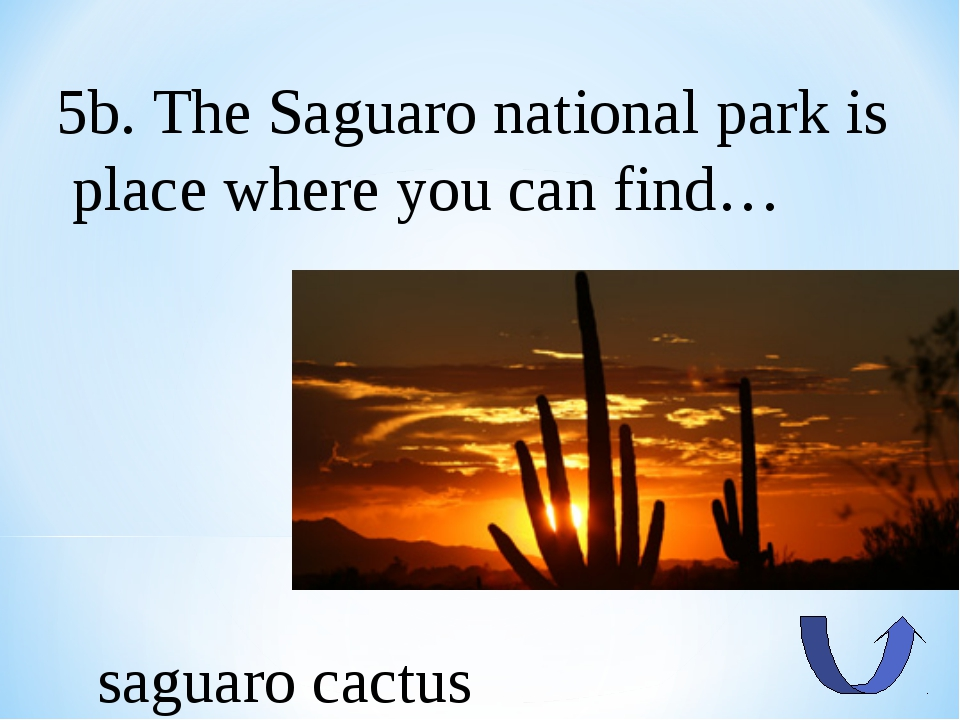 5b. The Saguaro national park is place where you can find… saguaro cactus