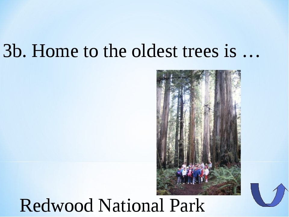 3b. Home to the oldest trees is … Redwood National Park