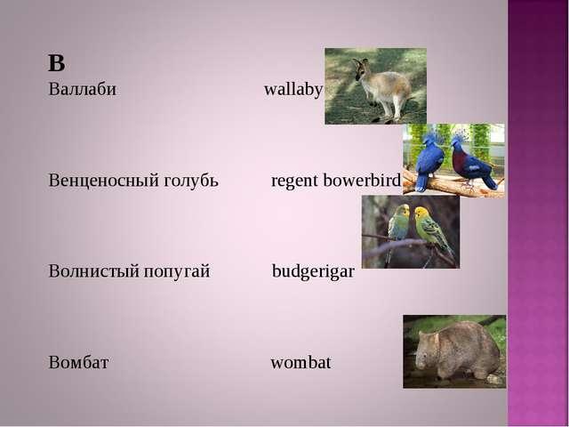 В Валлаби wallaby Венценосный голубь regent bowerbird Волнистый попугай budge...