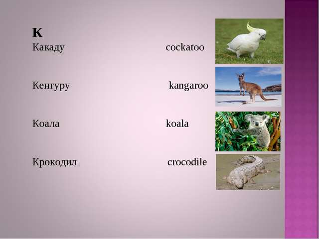 К Какаду cockatoo Кенгуру kangaroo Коала koala Крокодил crocodile