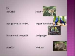 В Валлаби wallaby Венценосный голубь regent bowerbird Волнистый попугай budge