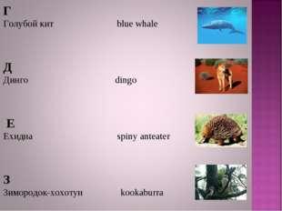 Г Голубой кит blue whale Д Динго dingo Е Ехидна spiny anteater З Зимородок-хо