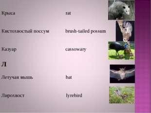 Крыса rat Кистохвостый поссум brush-tailed possum Казуар cassowary Л Летучая