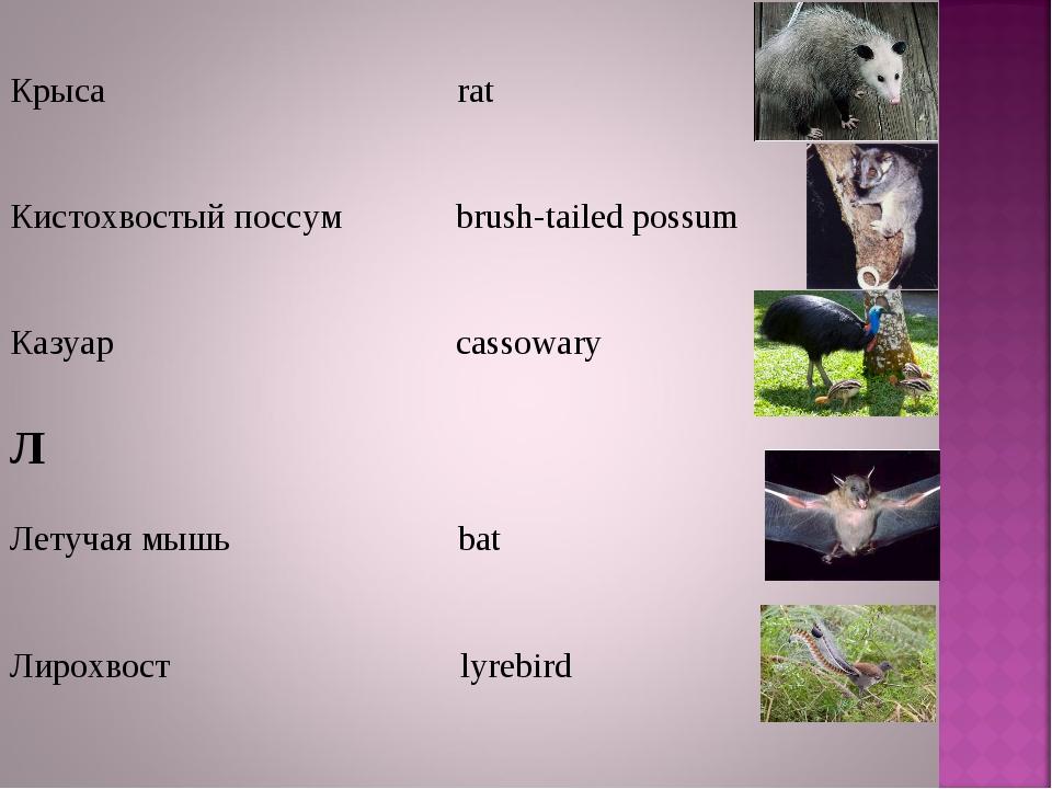 Крыса rat Кистохвостый поссум brush-tailed possum Казуар cassowary Л Летучая...