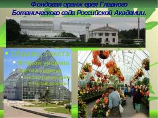 ФондоваяоранжереяГлавного Ботаническогосада Российской Академии.
