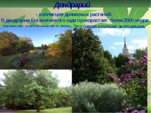 Дендрарий - коллекция древесных растений. В дендрарии Ботанического сада прои