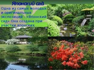 Японский сад. Одна из самых молодых и оригинальных экспозиций - «Японский сад